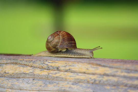 Schnellere Ladezeiten für mehr Conversion - auch bei Wordpress - Ladezeit und Conversion-Rate