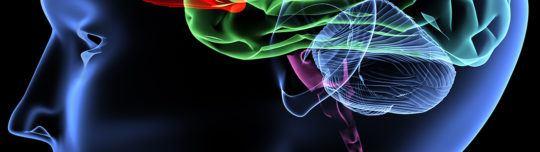 Neuromarketing - Esoterik in der Web-Optimierung